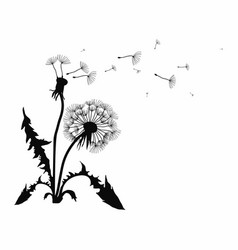 Silhouette of a dandelion with flying seeds black vector