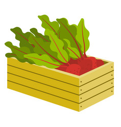 vegetable in box beet with leaves in crate vector image