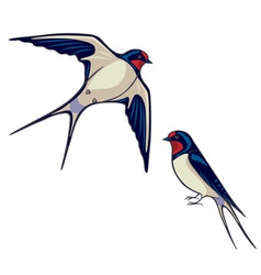 swallows vector image vector image