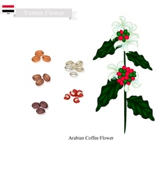 Coffee flowers national flower yemen vector