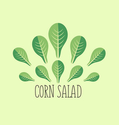 corn salad leaf vegetable cartoon icon with light vector image