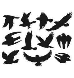 eagles and hawks black silhouettes birds vector image