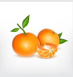 Ripe tangerine with slice vector