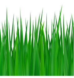 seamless green grass on white vector image