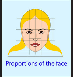face with lines showing facial proportions vector image
