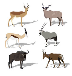 set of african antelopes vector image