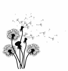 silhouette of a dandelion with flying seeds black vector image