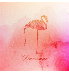 vintage of a pink watercolor flamingo on the old vector image vector image