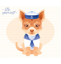summer fashion chihuahua puppy dog in sweet sailor vector image vector image