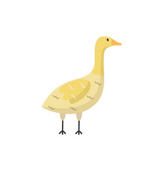flat goose bird isolated vector image