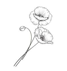 Flat single poppy vector