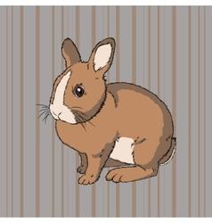 fluffy brown sitting rabbit vector image