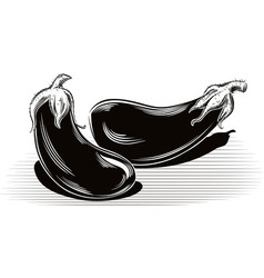 Ripe aubergine resting on a table vector