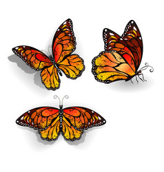 Set of Orange Butterflies Monarchs vector