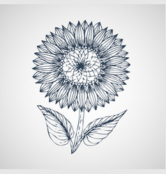 sunflower hand drawn vector image