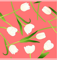 white tulip on pink background vector image vector image