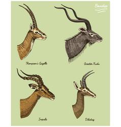 antelopes greater kudu gazelle thompsons dibatag vector image
