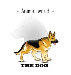 animal world the dog german shepherd background ve vector image