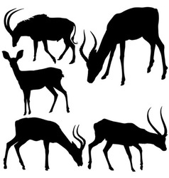 Antelope Silhouettes vector image vector image