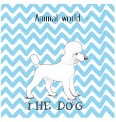 animal world the dog poodle background imag vector image