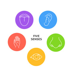 five senses poster with symbols in line style vector image