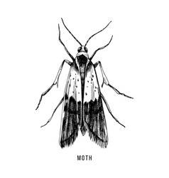 hand drawn food moth on white background vector image