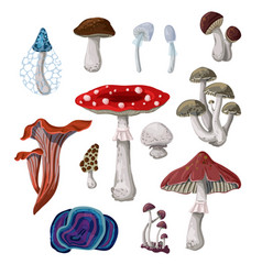 mushrooms isolated on a white background vector image