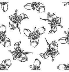 seamless pattern with black and white tigridia vector image