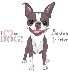 sketch dog Boston Terrier breed smiling vector image