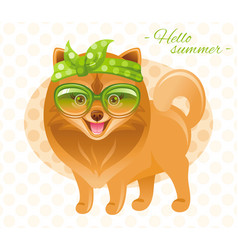 summer fashion pomeranian spitz puppy dog in sweet vector image