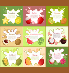 Carambola and lychee posters vector