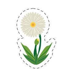 Cartoon daisy flower image vector