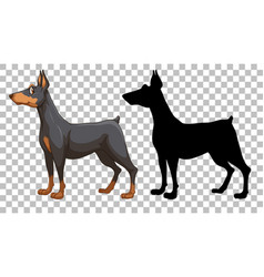 cute doberman pinscher and its silhouette vector image