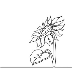 Drawing beautiful flower vector