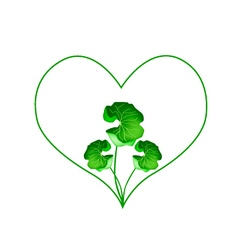 Fresh Asiatic Pennywort Plant in Heart Shape vector