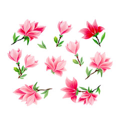 magnolia hand drawn set vector image