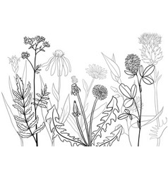 medical plants vector image