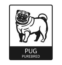 pug purebred icon simple style vector image