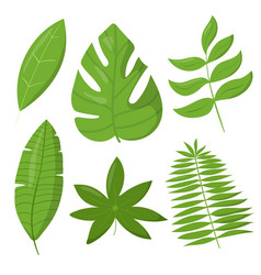 set tropic leaves elements isolated vector image