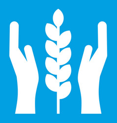 Hands and ear of wheat icon white vector