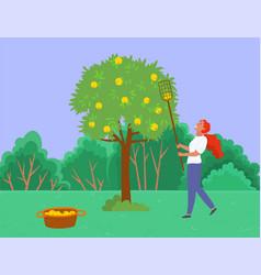 Gardening farmer picking apples from tree vector