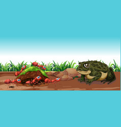 Nature scene with toad and ants vector