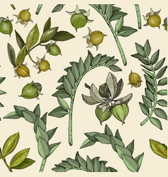 seamless pattern with jojoba nuts branch and fruit vector image