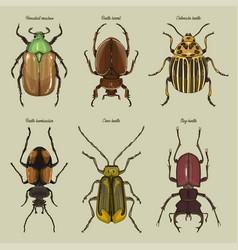 set of beetle vector image
