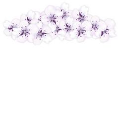 top frame bouquet sakura blue flowers vector image vector image