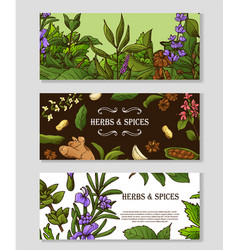 Banner set with hand drawn elements herbs and vector