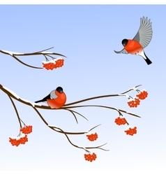 Bullfinch Birds on a Rowan Tree Branch in winter vector