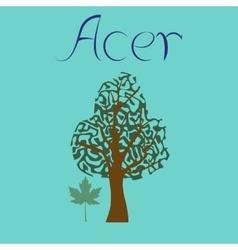 Flat stylish background plant Acer vector