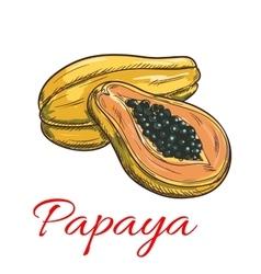 Papaya color sketch icon vector