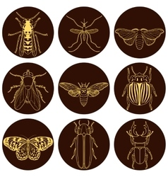 insect icons set Cicada and stag beetle firefly vector image